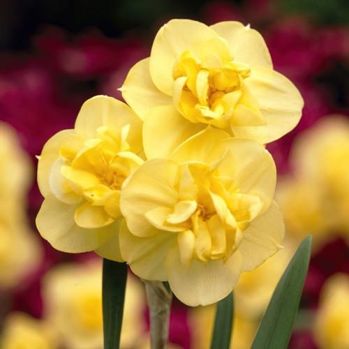 Yellow Cheerfulness...