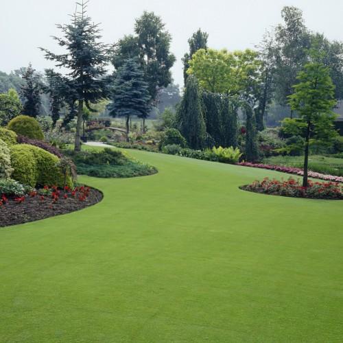 Premier Lawn Grass Seed
