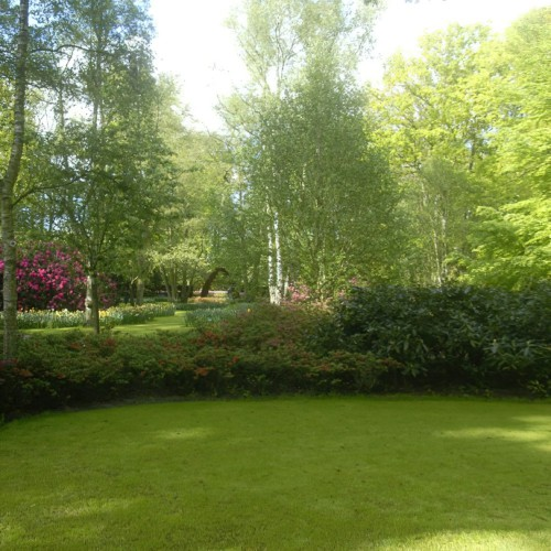 Shaded Lawn Grass Seed