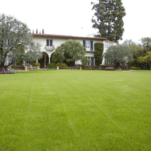 Fine Lawn Grass Seed