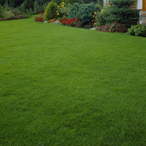 Quick Lawn - Grass Seed