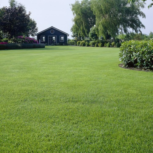 Back Lawn - Grass Seed