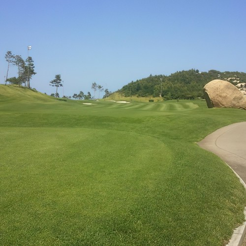 BB Golf Tees & Fairways -...