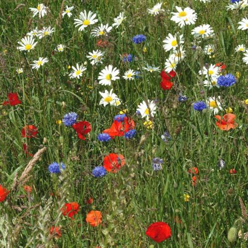 Flowering Meadow Mixture