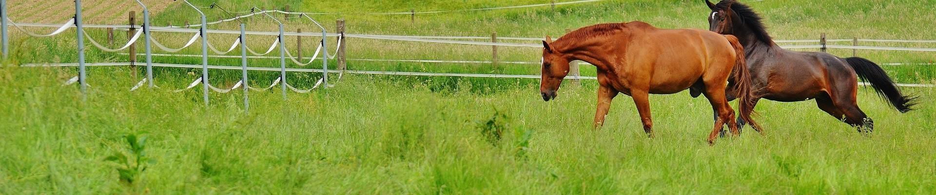 Horse Paddock Grass Seed