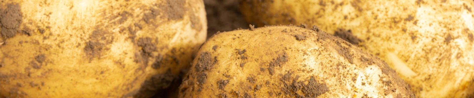 Seed Potatoes & Vegetables